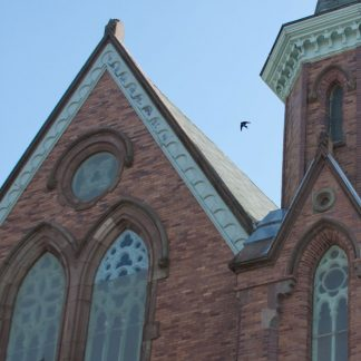 Swallow over Fort Massey United Church, Halifax