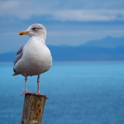 Single seagull on a post photo by Michael Kurzynowski at Unsplash